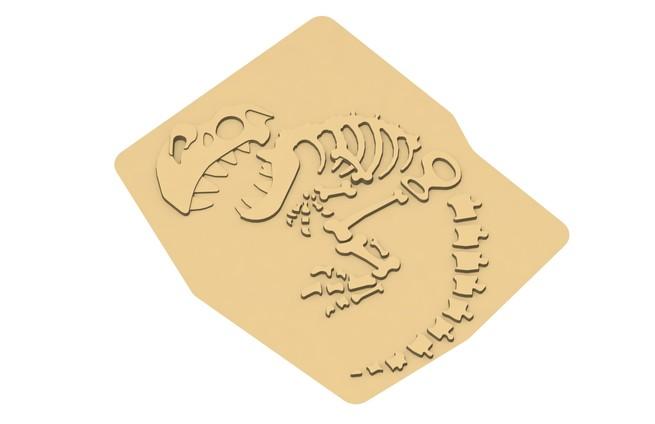 L 15020 fossile bcbc dino