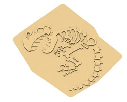 Fossile Bébé Dino (L-15020)